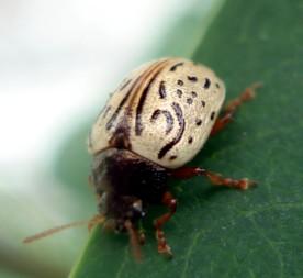 Fancy Bug