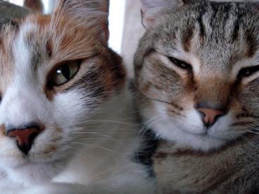 Chip and Momo