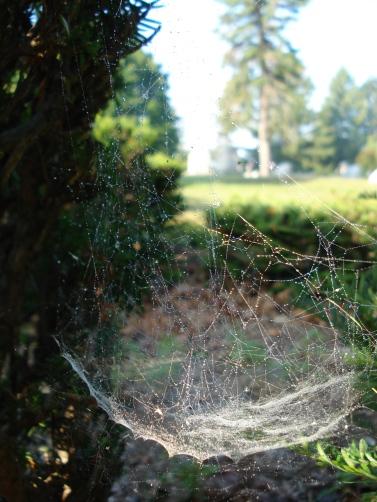 Spiderbowl