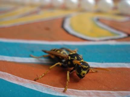 Sans Jacket (Artfunkle Bee)