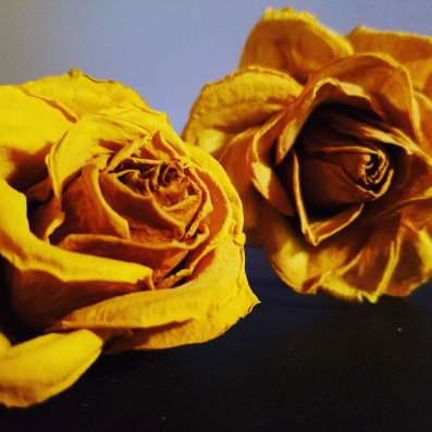KC Roses