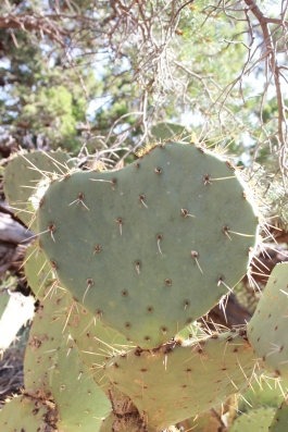 Prickly Heart