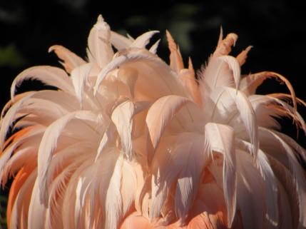 Flamingo Butt