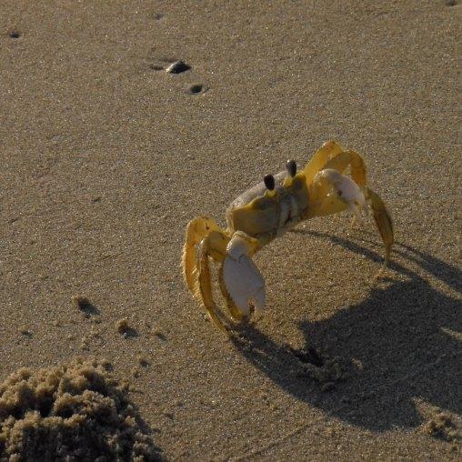 Crabster