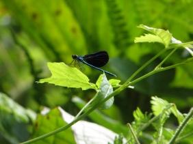 Bottlefly